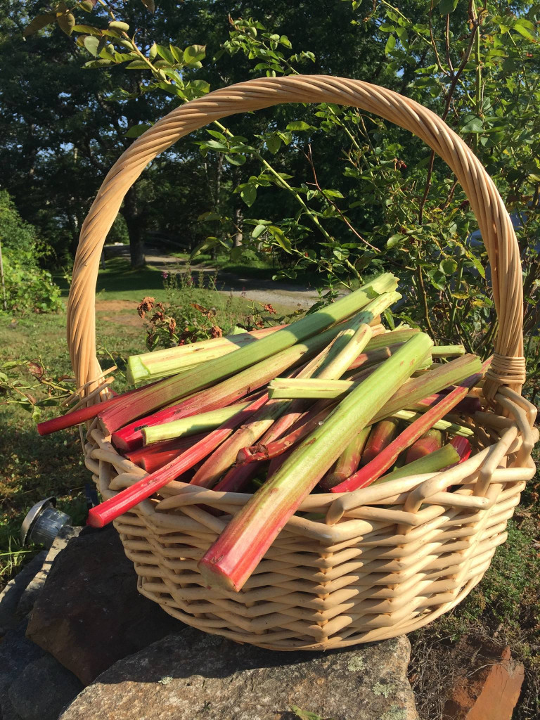 rhubarb basket